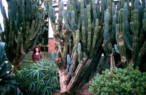 Cultivation | Coromandel Cacti