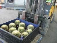 A shipment of Coro Cacti product.
