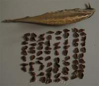 Contents of one seedpod.